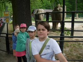 ze słoniem i słonicą